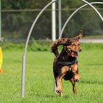 Hoopers ook bij HondPlus