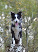 Doggy Bootcamp